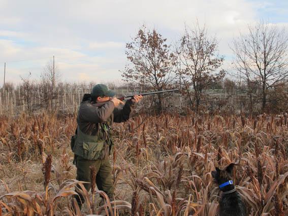caccia e conservazione fagiano